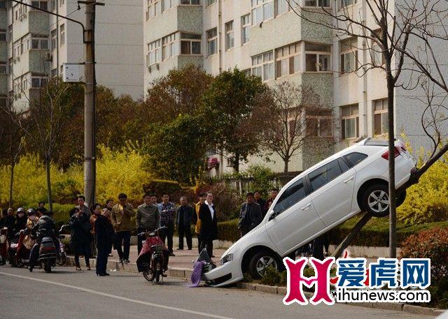 山东女司机油门刹车分不清:撞完电动车又爬上树-图1